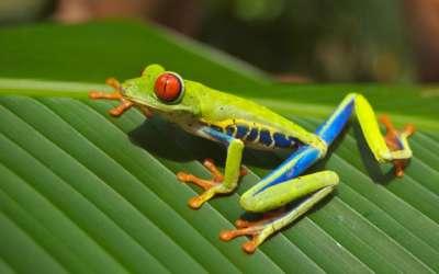 viaje de aventura a Costa Rica
