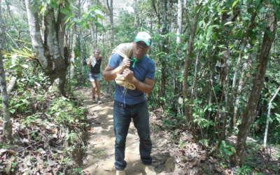 voluntariado ecológico